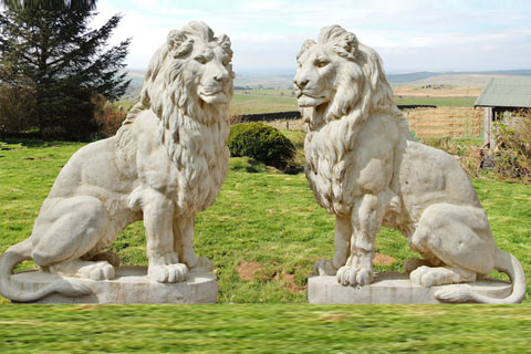 Outdoor big lion statues pair for sale